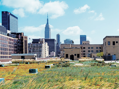 Green Roof in NYC