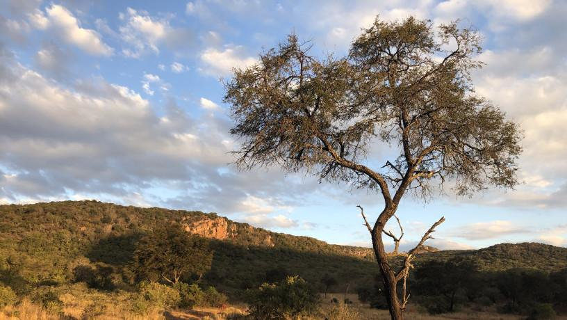 Sunny picture of the semi-arid Limpopo province in South Africa with a single tree in the foreground.