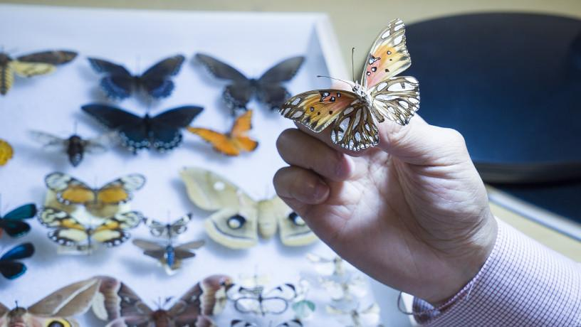 Prof. Yu holding a butterfly with white and brown wings.