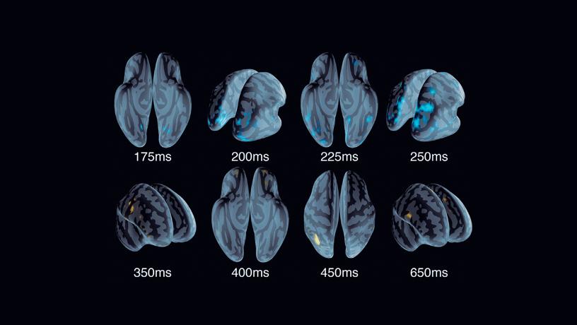 Graphic representation of the brain rapid decision-making.